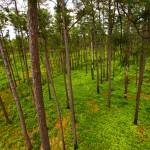 26_Pine Savannah Habitat on Piney Grove Preserve_Bryan Watts.jpg
