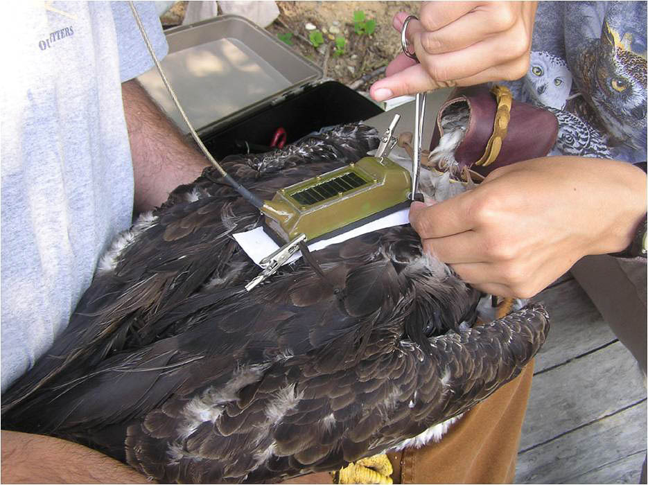 biology bird nest report Scientific publications on gathering the basic facts about the breeding biology of british birds report of the nest record scheme technical review.