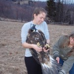 Libby Mojica holds the golden eagle as Patti Reum examines its tail plumage
