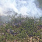Controlled Burn on Piney Grove Preserve
