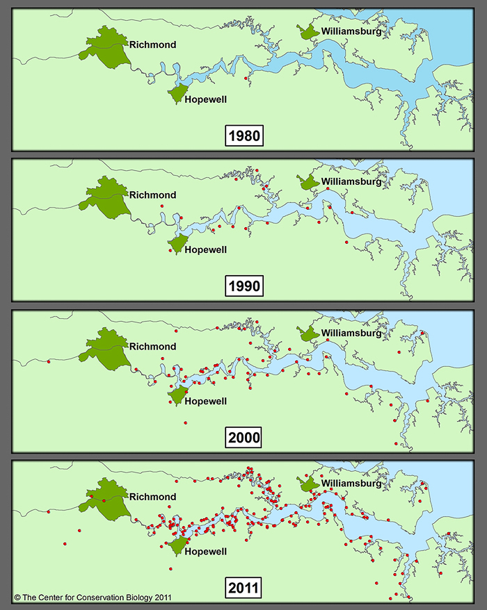 Bald Eagle nests on the James River 1980 - 2011.