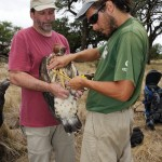 Bryan Watts and Maxi Galmes measure a Crowned Eagle foot.