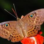 Butterfly along pipeline road