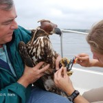 Craig Koppie and Elizabeth Mojica measure a Bald Eagle along the Bush River, MD.