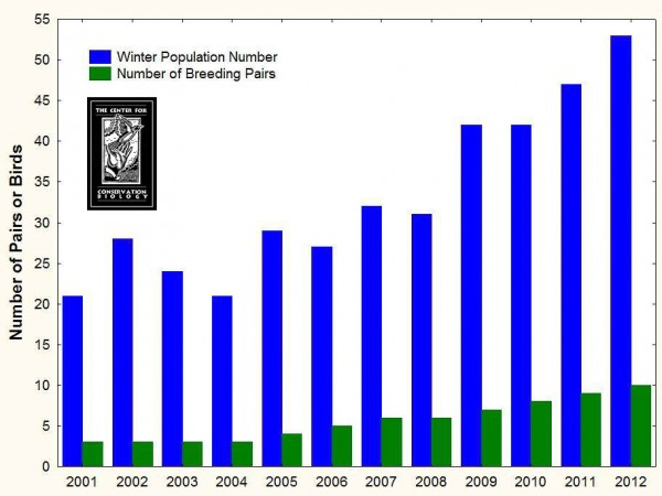 The Red-cockaded Woodpecker Population at the Piney Grove Preserve has steadily increased since 2001.  The Center for Conservation Biology surveys the population two times per year as well as regularly monitoring breeding activities such as egg laying, incubation, and fledgling success. Graph by CCB.