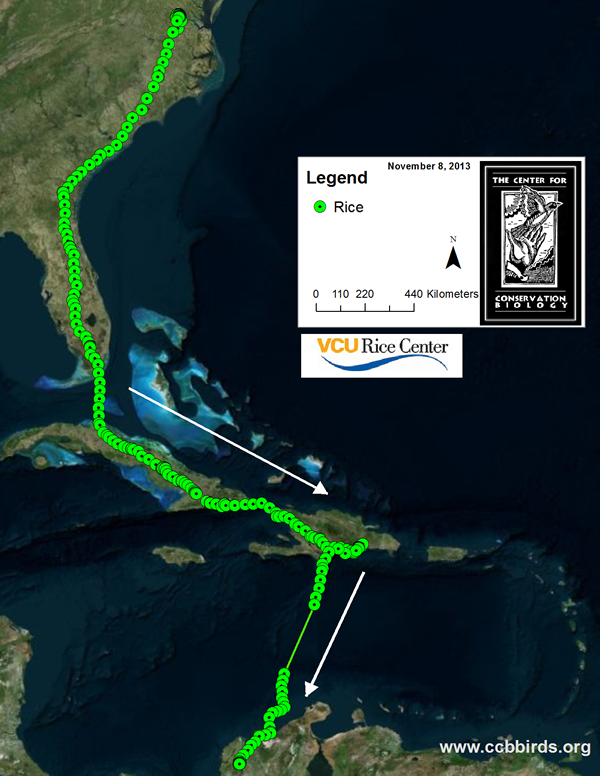 Fall 2013 migration map for Rice the Osprey. Rice is wintering on the Rio Magdelena in Columbia.