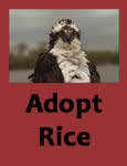 Adopt Icon for Rice the Osprey