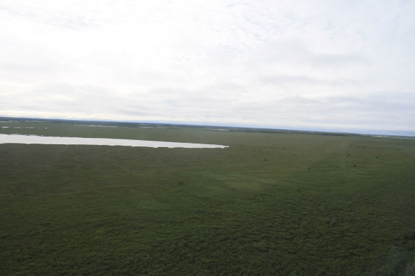 The Low-centered Polygon habitat as we depart the delta. Notice the ridges are still apparent, but that the centers of the polygons have mostly dried. The delta quickly turns from frozen or flooded to vast expanses of green marsh. Photo by Fletcher Smith.