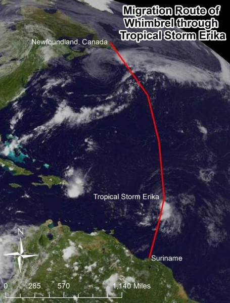 Migration route of Upinraaq the whimbrel through Tropical Storm Erika. Image of storm courtesy of NOAA. Data from CCB.