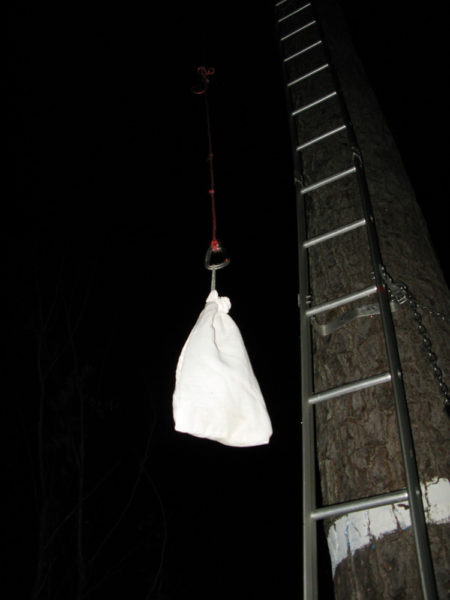 Bird in a bag is pulled up to be placed in an artificial cavity for release at dawn. Photo by Bryan Watts.
